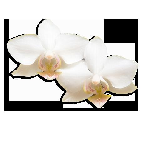 orchidea-bianca-estetica_a_losone_beautycare